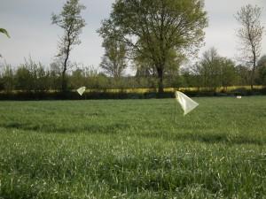 Flatterkram als Vergrämungsmittel vor der Wiesenmahd; Weidenäste 200 cm lang + ein gelber Sack und/ oder gefaltete Zeitung