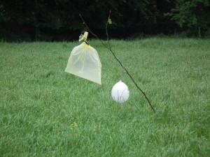 """Der Bauer meldet die Wiesenmahd für den folgenden Tag. Um das Totmähen der Kitze zu verhindern, werden am Vorabend diese """"Rehgespenster"""" (2 m Haselrute, ein Gelber Sack und ein Luftballon oder Zeitung in Fächerform angebunden) installiert. Rehe sind Bewegungsseher. Die Haselrute mit dem Wind einstecken, damit sich alles schön dreht"""