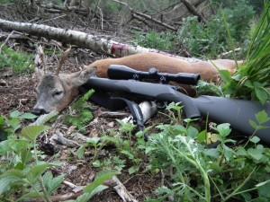 Mein Waldbock. Erlegt bei Sebastian Hildebrand. mit meiner Mauser M12 Extreme, Kaliber 30.06. Der stark zurückgesetzte Sechser war circa 6-7 Jahre alt und wog 18 kg.