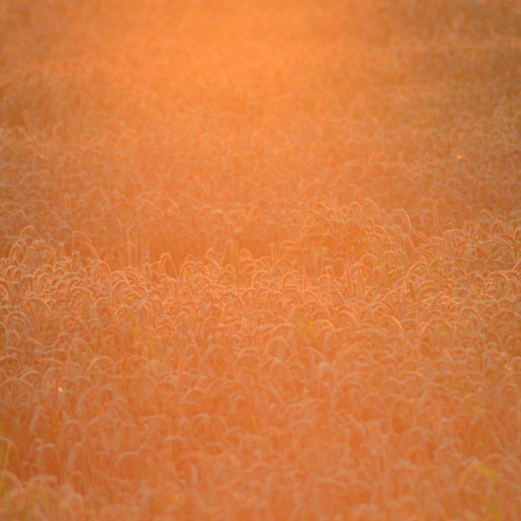 Die Morgensonne. Das Erzeugte Licht Schafft Eine Eine Einzigartige Stimmung.
