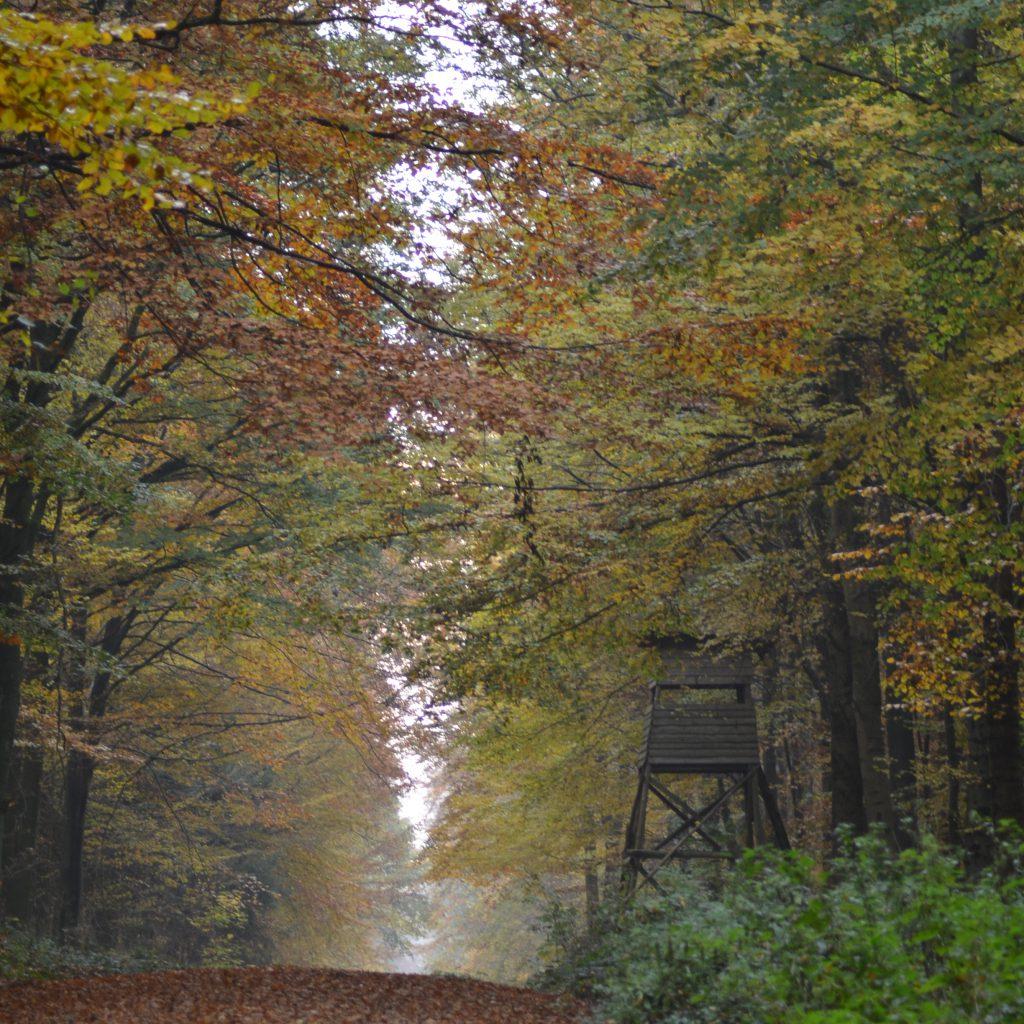 Der Herbstwald Ist Immer Einen Besuch Wert. Als Jäger Ist Man Zudem Noch Privilegiert, Den Wald Und Dessen Natürliche Ressourcen Ganz Anders Genießen Zu Können.