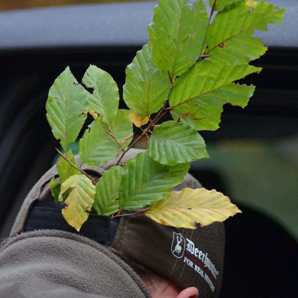 Der Erlegerbruch (Dreispross) Ist Gewollte Und Gelebte Tradition. Es Wurde Kein Bruchgerechter Baum Benutzt, Da Weit Und Breit Nur Buchenbäumen Standen.