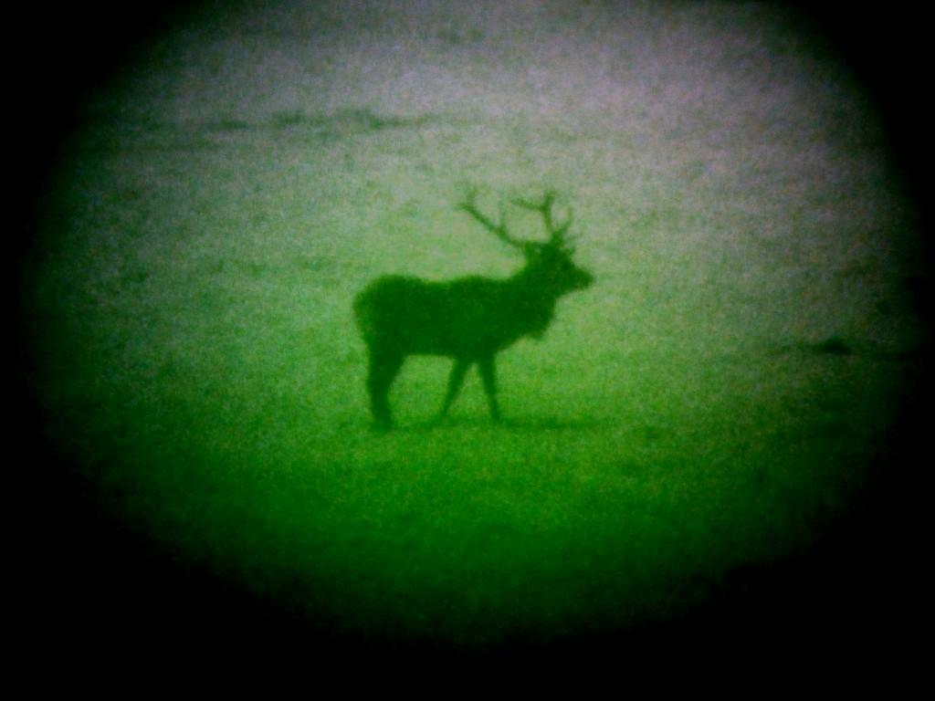 Rothirsch mit Nachtsichtgerät Dipol DN 34 jagdfux