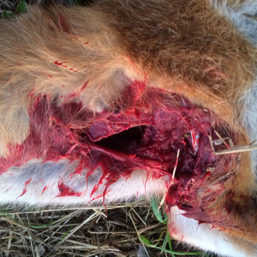 RWS Hit Fuchs Im Knall 118 M (4)