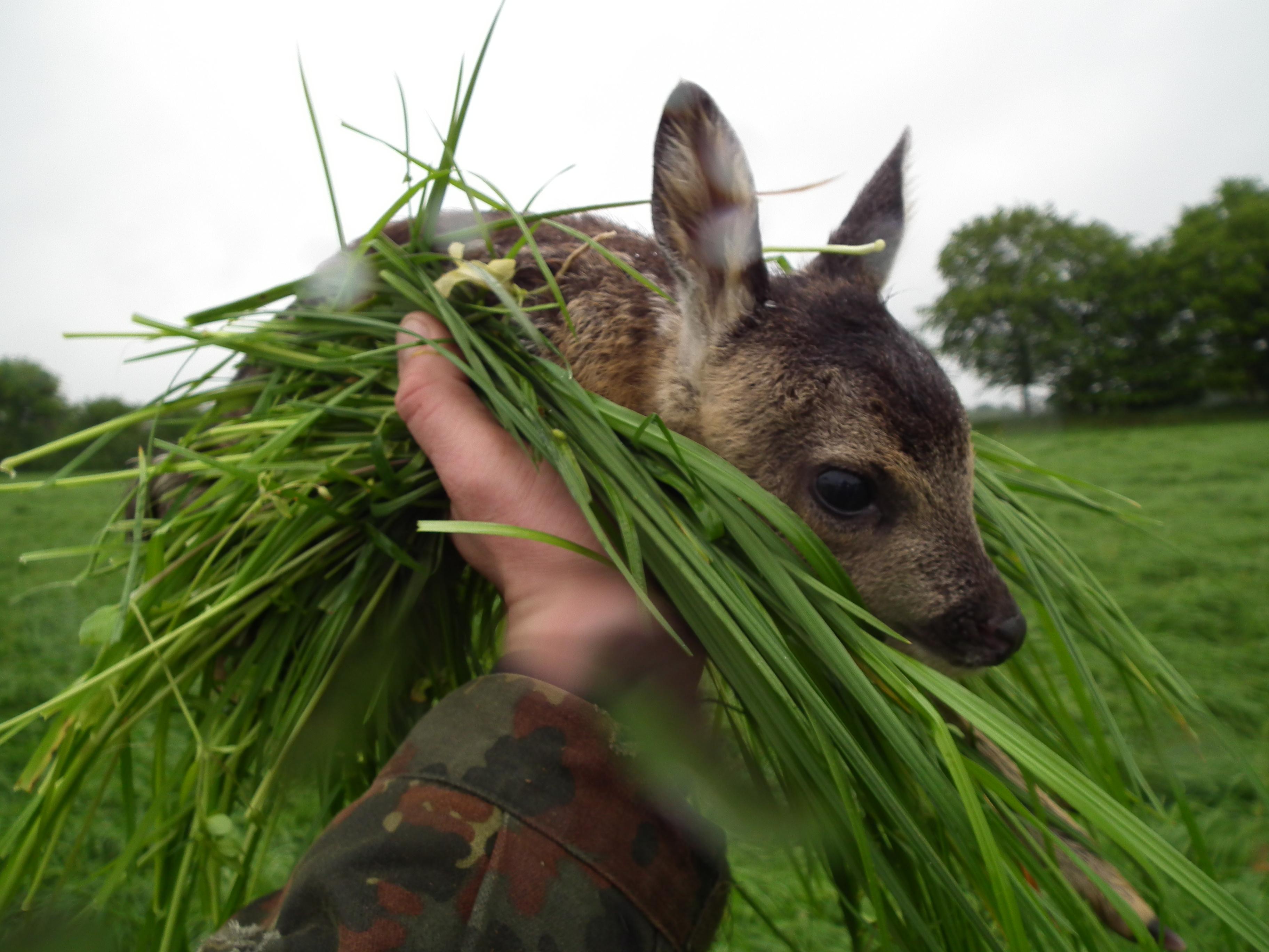 Vorbereitungen Für Wiesenmahd & Kitzrettung