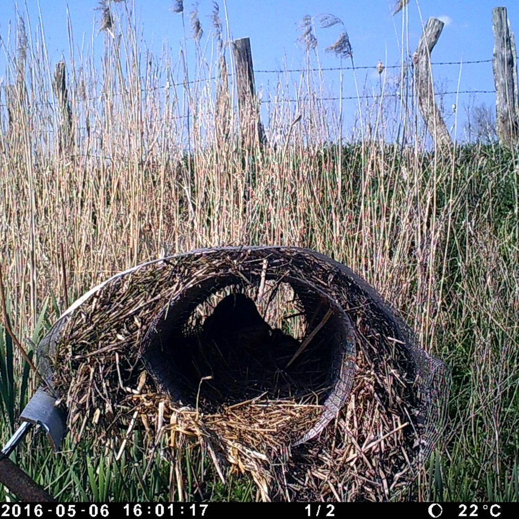 Eines Der Letzten Bilder. Wenn Man Genau Hinsieht, Erkennt Man Die Küken Im Nest.