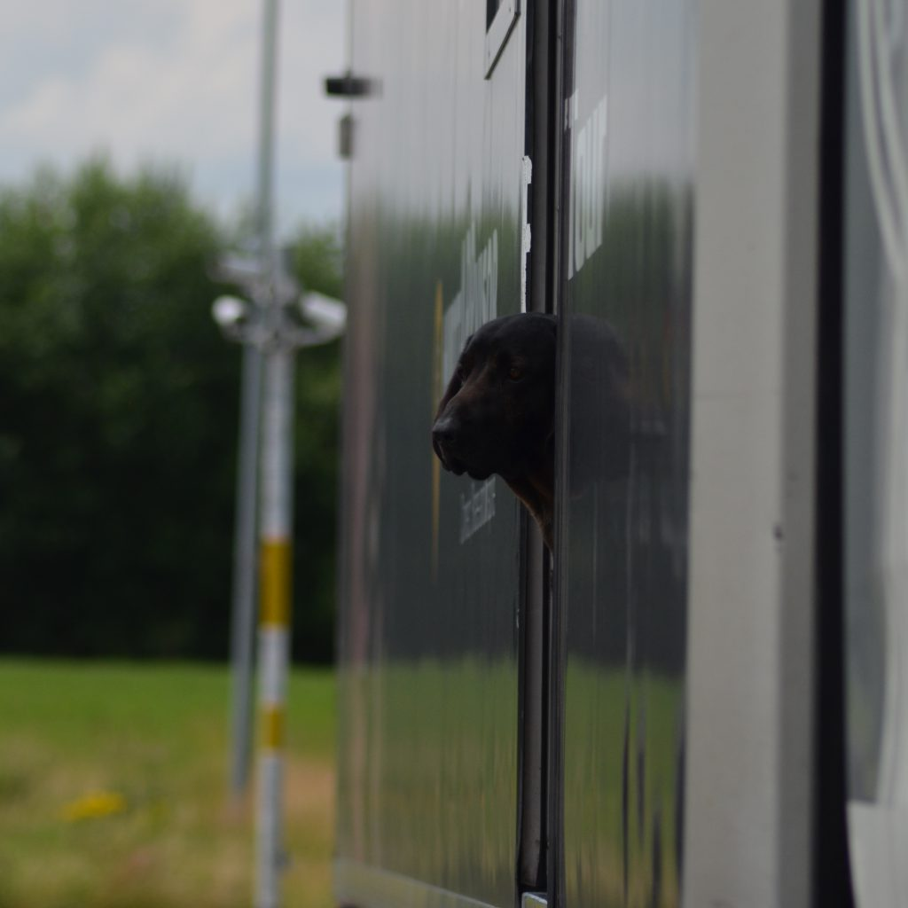 Am Wohnmobil Von Max Angekommen, Wurde Ich Von Seinem Bayrischen Gebirgsschweißhund Fossi Empfangen.