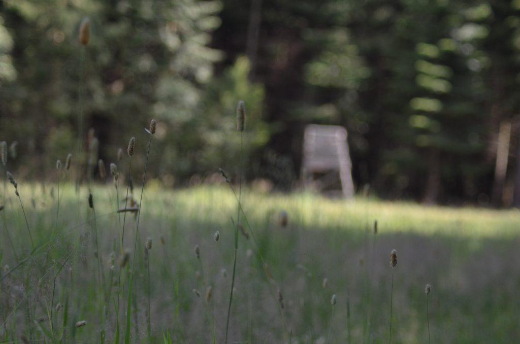 Im Waldrevier gibt es nur wenige Freiflächen, auf denen Wildäcker angelegt sind. Sie ziehen das Wild aus dem Wald. Ganzjährig kann das Schalenwild hier Äsung aufnehmen. Nur ein Faktor zur Verhinderung von Schäl- und Verbissschäden im Wald, erklärt mir Paul. Bereits beim Pirschen sehen wir ein Damalttier mit den vor wenigen Tagen gesetztem Kalb.