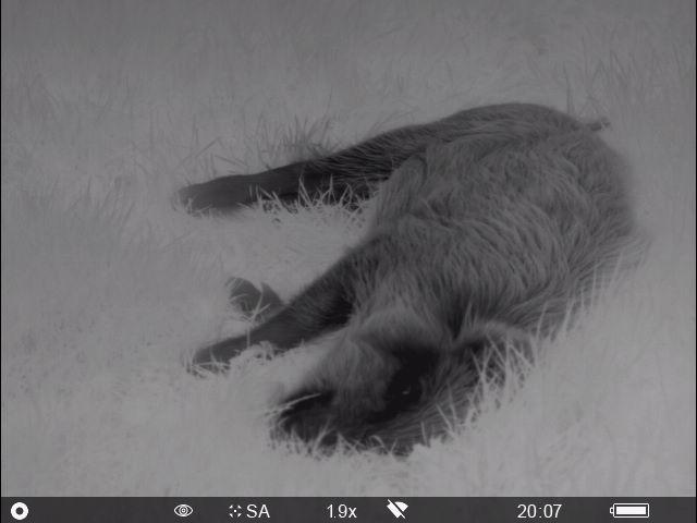 Die Rotte Konnte Ich Dank Der Wildkamera Rechtzeitig Anwechseln Sehen. So Gelang Es Einen Frischling Sauber Zu Erlegen.