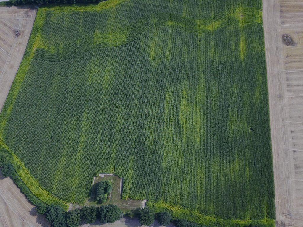 Übersichtsaufnahme Maisfeld