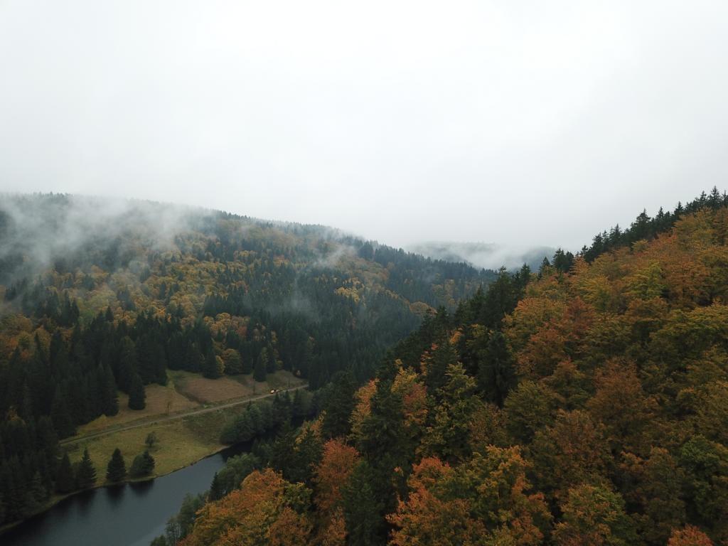 Rotwildjagd In Thüringen