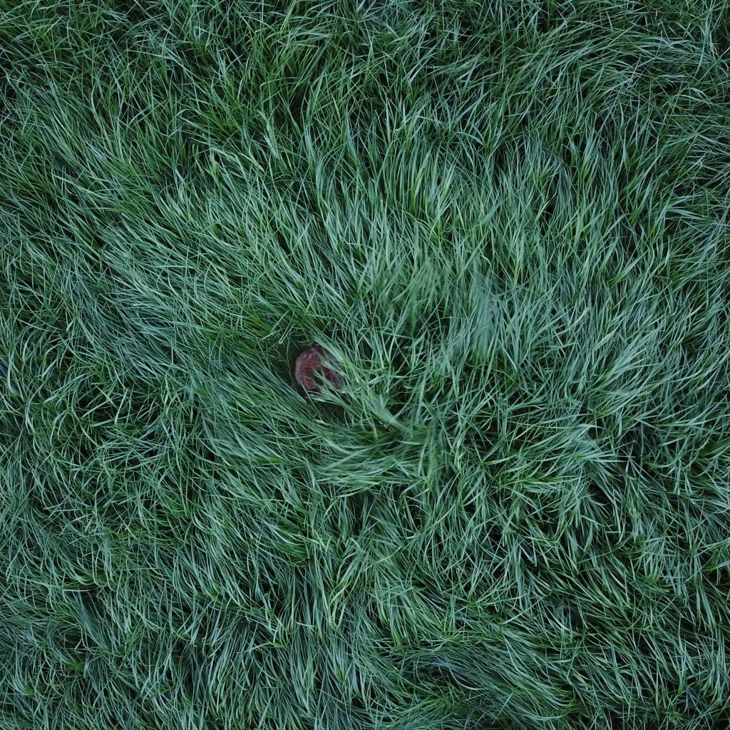 Rehkitze Bleiben In Den Ersten Lebenswochen Bei Drohender Gefahr Regungslos Liegen. Auch Vor Einem Mähwerk Flüchten Sie Nicht, Sondern Verenden Teilweise Qualvoll.