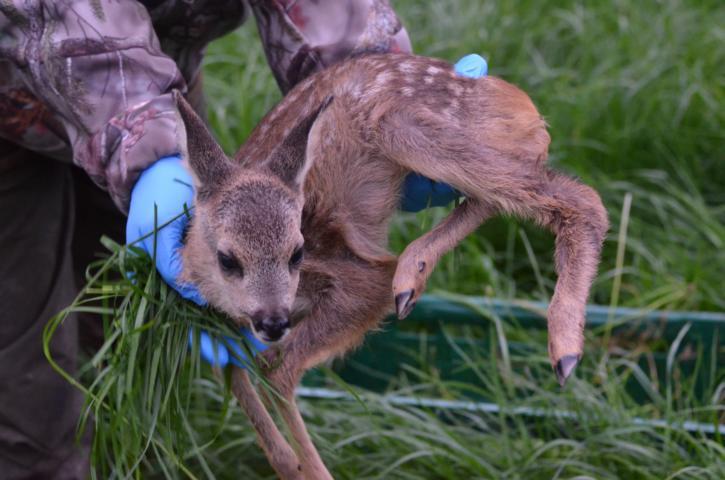 Tiermassaker, Kitzrettung 2.0 Oder Es Ist Des Jägers Ehrenschild