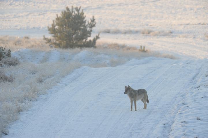 Wolf In Deutschland Foto: Eike Mross