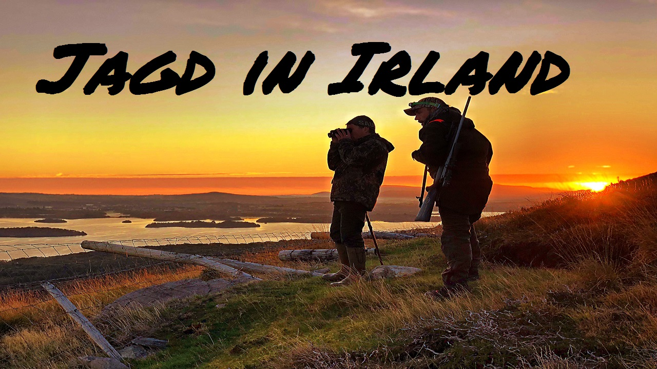 Jagd In Irland – Sika, Highlands Und Gold Of Kerry