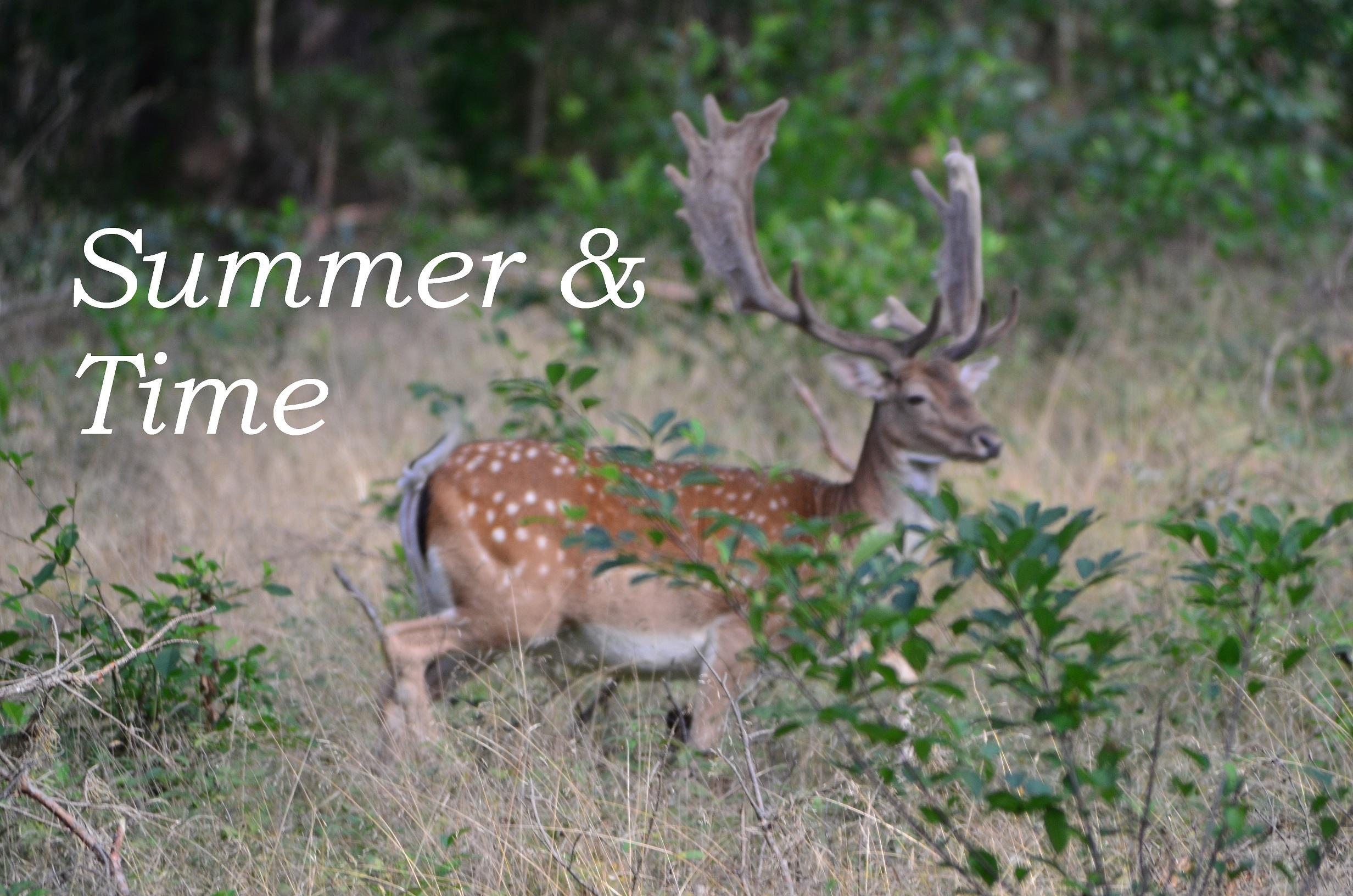 Summer & Time DOY 2016