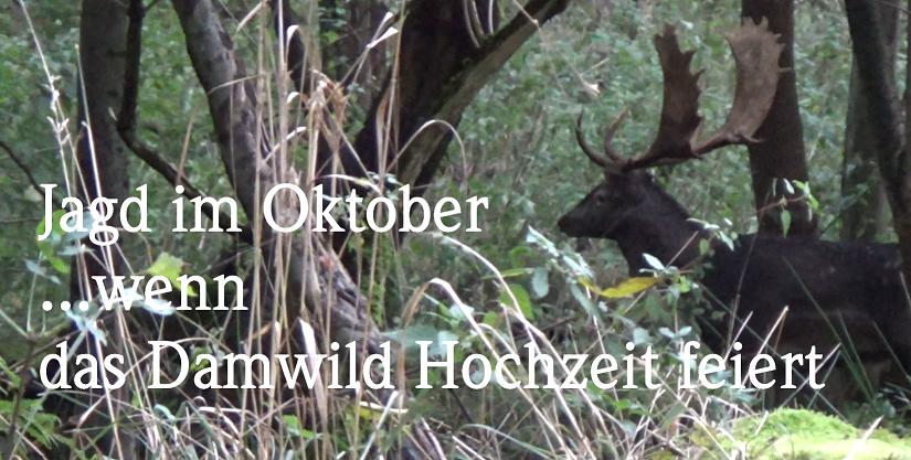 """Neues Video """"Jagd Im Oktober, Wenn Die Damhirsche Hochzeit Feiern"""""""