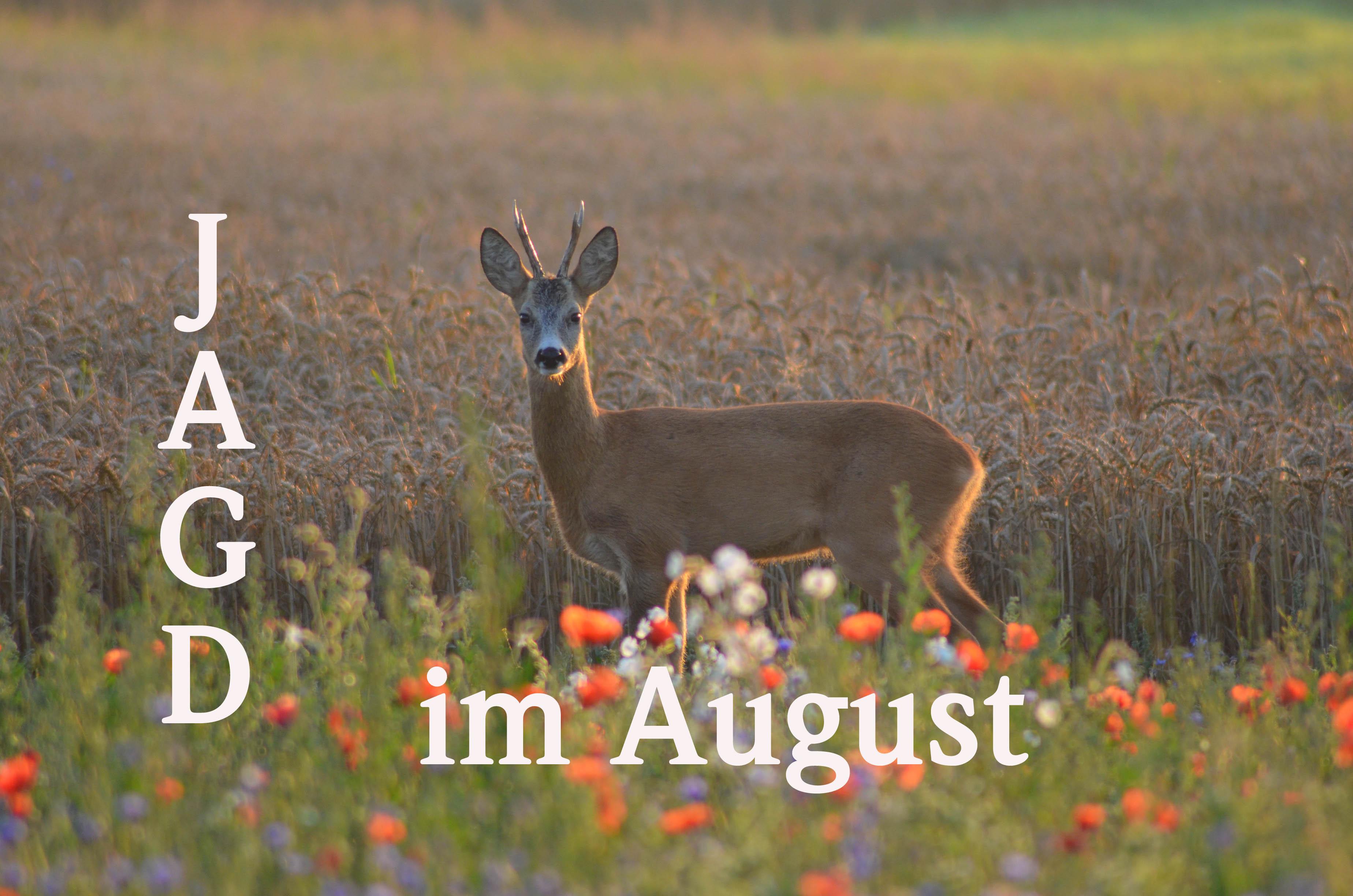 Fehlt Euch Auch Der Sommer?