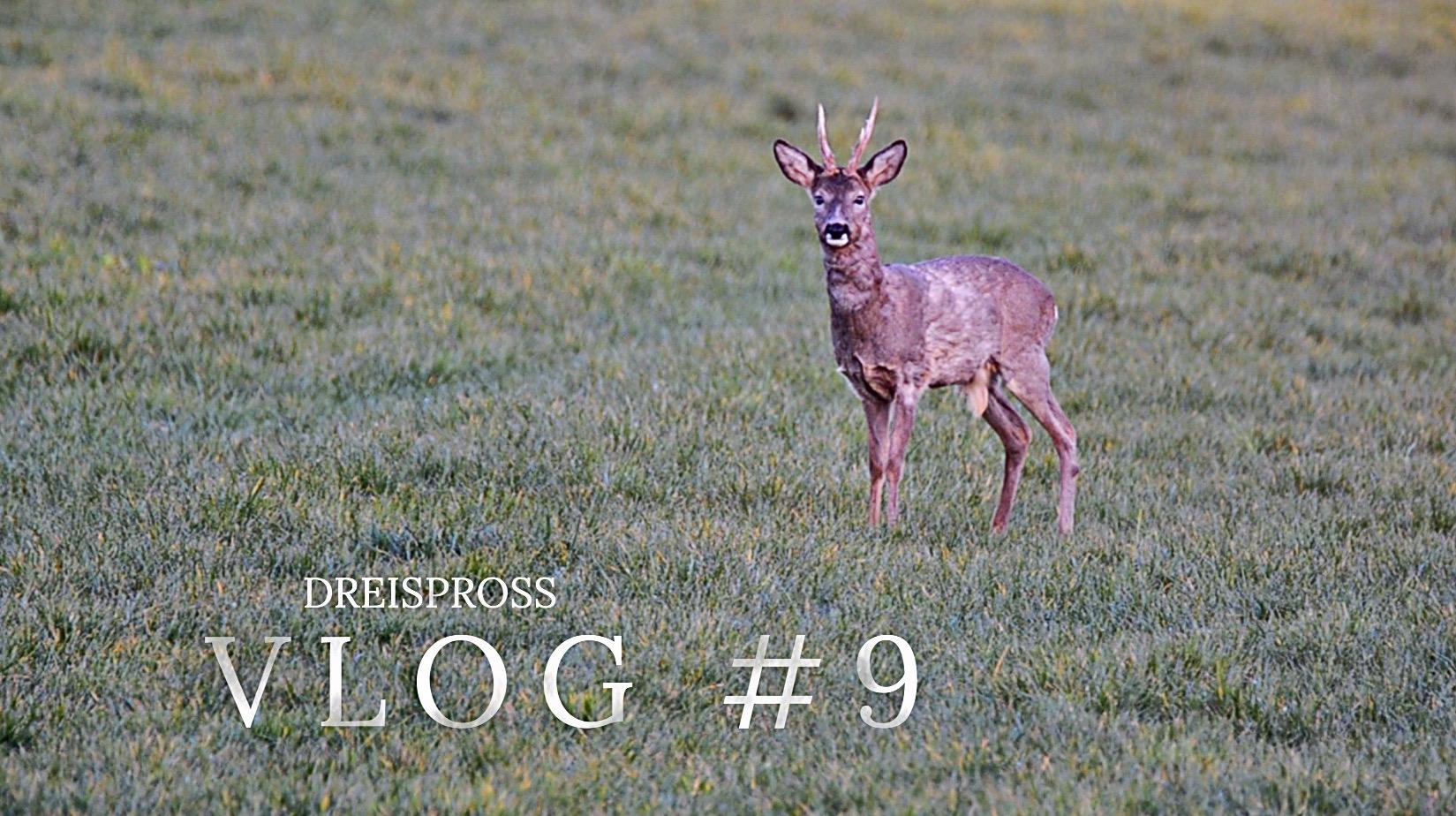 Jagd Dreispross VLOG #9